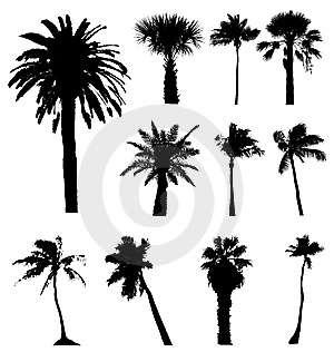 Maximas y minimas: las palmeras no se andan por las ramas