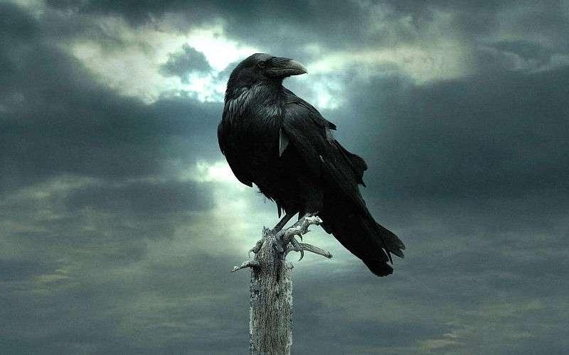El cuervo de edgar allan poe, traducción de julio cortázar