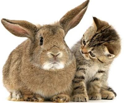 Los miles por las miles: ¿de gatos o de liebres?, por luis silva-villar