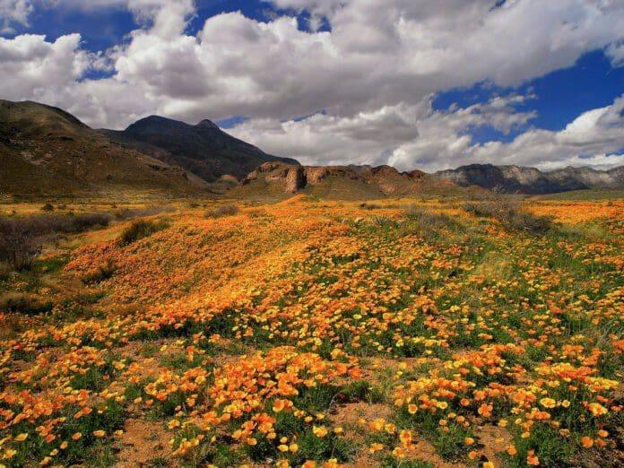 Castner Range, TX Courtesy of Mark Clune